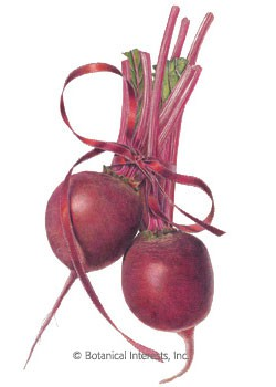 Beet Detroit Dark Red HEIRLOOM Seeds