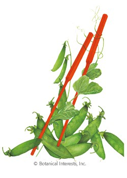 Pea Snow Oregon Sugar Pod II Seeds