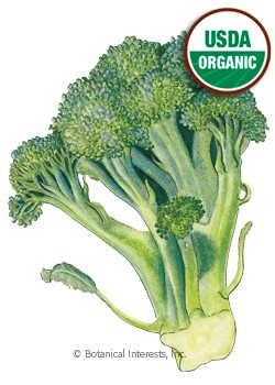 Broccoli Di Cicco Organic HEIRLOOM Seeds