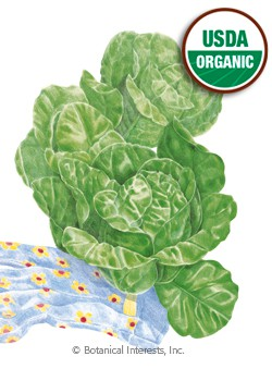 Lettuce Romaine Little Gem Organic HEIRLOOM Seeds