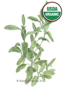 Sage Garden Broadleaf Organic HEIRLOOM Seeds