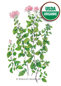 Oregano Common Organic HEIRLOOM Seeds
