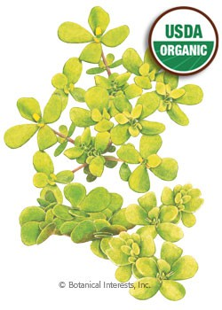 Purslane Golden Organic HEIRLOOM Seeds