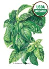 Basil Italian Genovese Organic HEIRLOOM Seeds