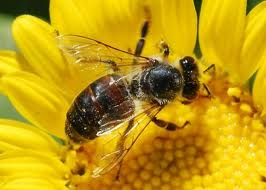 Attracting Bees to the Garden