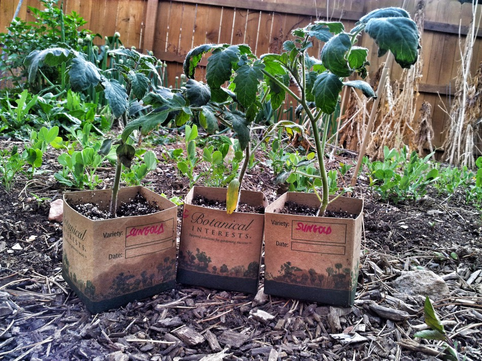5 Steps to Harden Off Seedlings