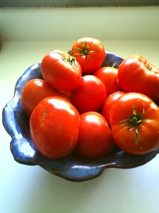 Tomatoes: Late-Season Harvest and Storage Techniques