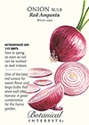 Onion Bulb Red Amposta Seeds