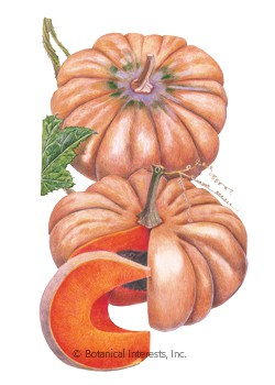 Pumpkin French Musquée de Provence HEIRLOOM Seeds
