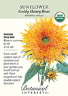 Sunflower Goldy Honey Bear Organic Seeds