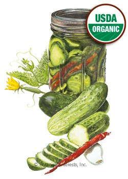 Cucumber Homemade Pickles Organic Seeds