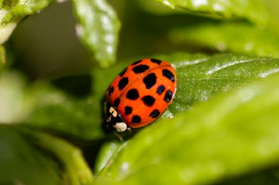 Natural Pest Control Tips